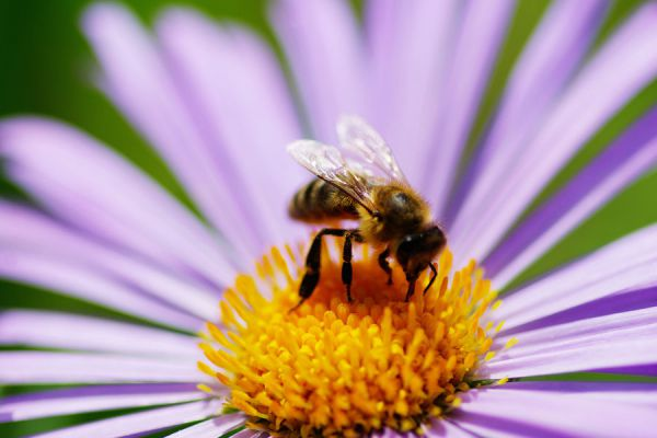 Preparación de un insecticida natural y orgánico. Cómo elaborar un insecticida natural y casero. Receta casera para hacer un insecticida orgánico