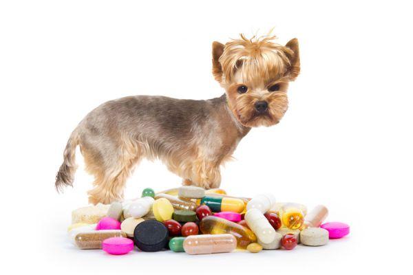 Métodos para medicar al perro. Tips para darle medicinas al perro. Cómo darle un jarabe al perro. Cómo hacer que el perro consuma su medicina