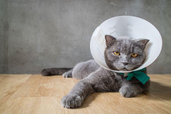 Las lombrices al gatito 2 meses los indicios