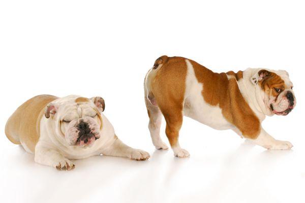 Por qué se producen las flatulencias? Ventajas de liberar flatulencias. 8 beneficios de las flatulencias.