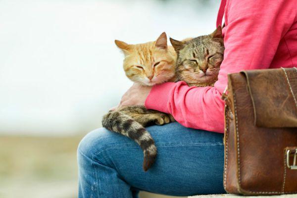 Por qué los gatos se suben al regazo? Por qué el gato se sube a la piernas. Motivos por los que el gato se sube a los hombros