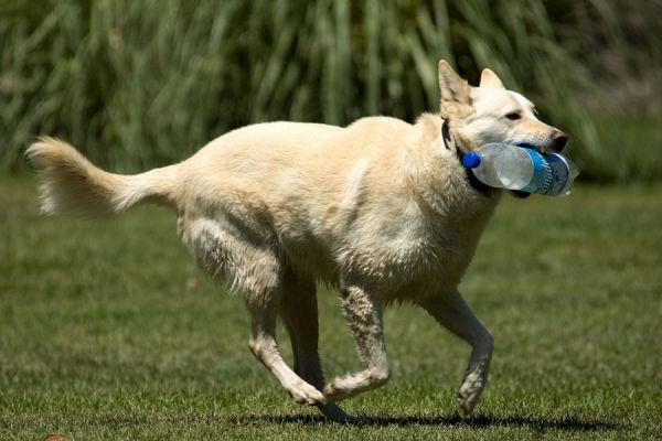 Productos peligrosos para perros. Elementos peligrosos para gatos
