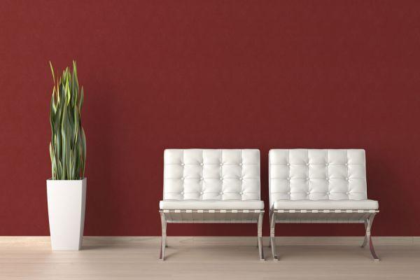Tips para decorar la casa con plantas. Cómo ambientar el hogar con plantas. Ideas para una decoración con plantas. Decorar la sala con plantas
