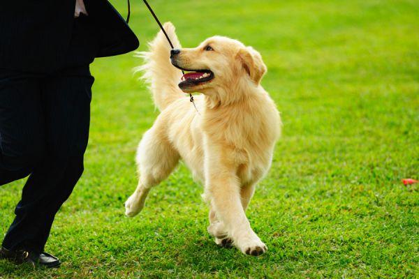 Método para entrenar a un perro. Tips para adiestar al perro.