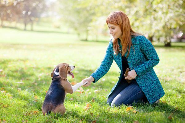 Consejos para el adiestramiento de un perro. Método simple para adiestrar a tu perro