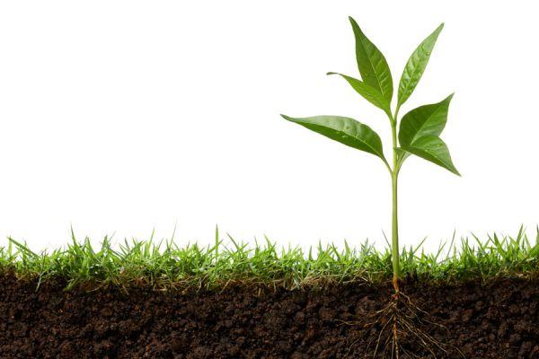 Los brotes de césped también se benefician de este fertilizante natural