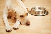 Cómo Alimentar a un Perro