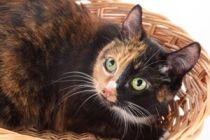 Como cuidar una gata preñada