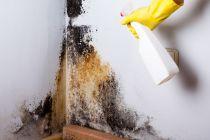 C mo eliminar el moho de las superficies - Quitar humedad de las paredes ...
