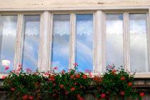 Consejo para limpiar los vidrios de las ventanas