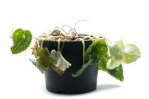 Cómo Recuperar una Planta Dañada por Exceso de Agua