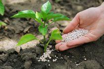 Cómo Abonar nuestras Plantas con productos caseros