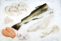 Cómo conservar el pescado en la heladera o refrigerador