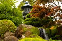Como perfumar el jardín con arbustos