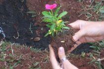 Como mejorar la tierra de las flores