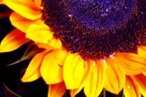 Cómo decorar con flores grandes