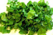 Cómo utilizar las propiedades del coriandro o cilantro
