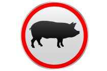 Cómo se transmite la influenza A H1N1 o gripe porcina