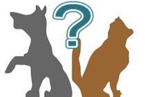 Cómo elegir entre un gato y un perro como mascota