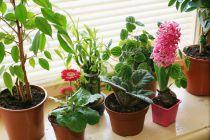 Cómo Mantener las Plantas Verdes