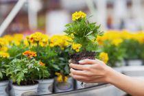 Los Colores de las Flores para tu Jardín