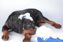 Cómo ayudar al medio ambiente mientras cuidamos nuestra mascota