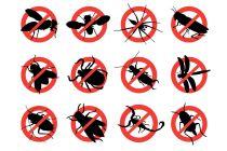 Cómo ahuyentar a los insectos