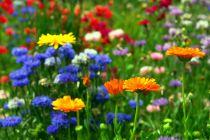 Cómo tener Flores en el Jardín Durante el Invierno