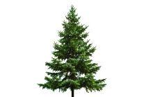 Cómo renovar un viejo árbol de Navidad