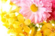 Cómo hacer un jardín aromático