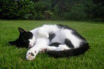 Cómo Evitar que los Animales Dañen el Jardín