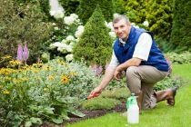 Cómo cuidar las plantas del jardín