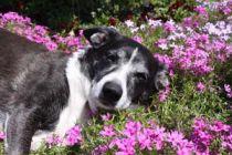 Cómo evitar la presencia de perros vagabundos en el jardín