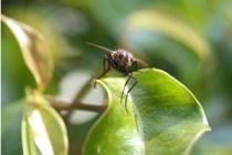 Cómo eliminar plagas desconocidas del jardín