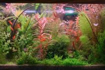 Cómo hacer un acuario de plantas