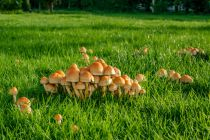 Cómo eliminar los hongos de jardín