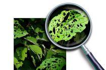 Trucos para quitar los pulgones de las plantas for Como eliminar los mosquitos del jardin
