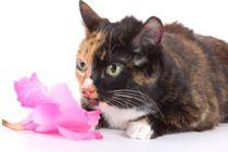 Cómo evitar la Alergia a los Gatos
