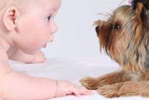 Cómo tratar al perro cuando llega un bebé