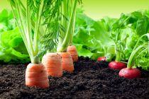 Cómo cultivar vegetales en casa