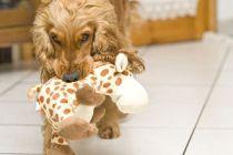 Cómo enseñar al perro a no morder tus cosas