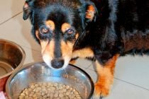 Dieta para Perros con Diabetes