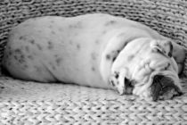 Cómo saber si tu perro tiene sobrepeso
