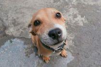 Qué hacer con la mascota tras una separación