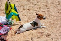Qué llevar si vas de vacaciones con tu perro
