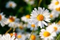 Cómo Elegir las Flores del Jardín