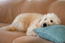 Cómo Quitar el mal Olor a Perro