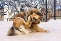 Cómo Cuidar la Piel del Perro