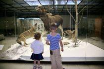 Cómo Visitar un Museo con Niños