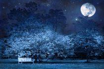 Cómo Aprovechar la Luna en Jardinería